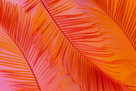 Tropical summer background - colorful (pink, orange) exotic leaves.