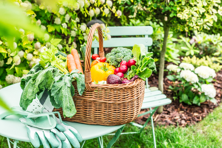 Colorful organic spring vegetables in wicker basket outdoor on table. Fresh harvest from the garden - healthy rural lifestyle. Stock Photo