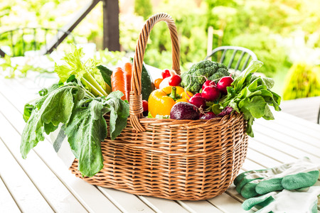 Colorful organic spring vegetables in wicker basket outdoor on terrace table. Fresh harvest from the garden - healthy rural lifestyle.