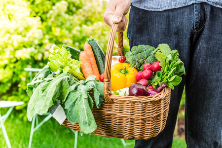 Gardener holding wicker basket filled with colorful organic spring local vegetables. Fresh harvest from the garden - healthy rural lifestyle.
