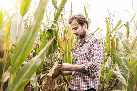 Forty years old caucasian farmer in plaid shirt control (check) his corn field. Agriculture - country outdoor scenery.