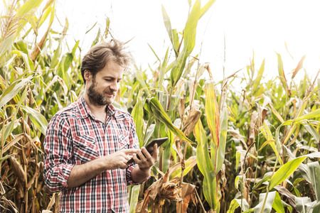 Forty years old caucasian farmer in plaid shirt working on (using) tablet in front of corn field. Modern technology in agriculture - concept. Country outdoor scenery.
