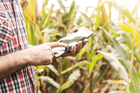 Tablet in farmers hands in front of corn field. Modern technology in agriculture - concept. Country outdoor scenery.