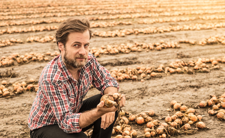 Forty years old caucasian farmer in plaid shirt control (check) his onion field. Agriculture - country outdoor scenery. Banco de Imagens