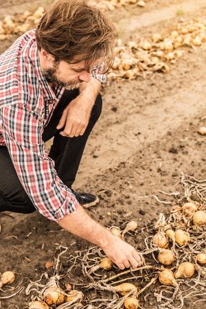 Forty years old caucasian farmer in plaid shirt control (check) his onion field. Agriculture - country outdoor scenery. Stock Photo