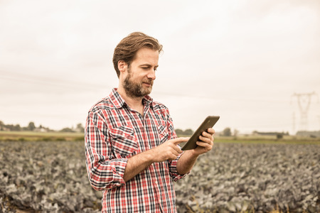 Happy smiling forty years old caucasian farmer in plaid shirt working on (using) tablet in front of cabbage field. Modern technology in agriculture - concept. Country outdoor scenery.
