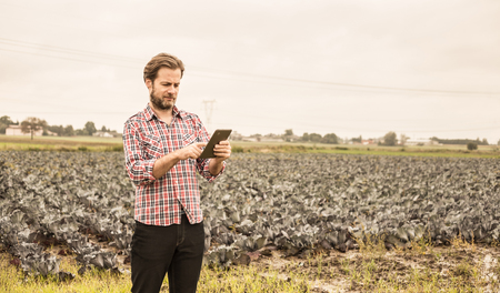 Forty years old caucasian farmer in plaid shirt working on (using) tablet in front of cabbage field. Modern technology in agriculture - concept. Country outdoor scenery.