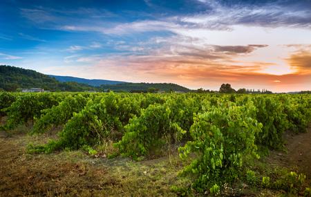 Viñedo y puesta del sol - agricultura. Europa del sur, paisaje del campo de Provence (Francia).