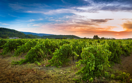 Vineyard and sunset - agriculture. South Europe, Provence (France) countryside landscape.