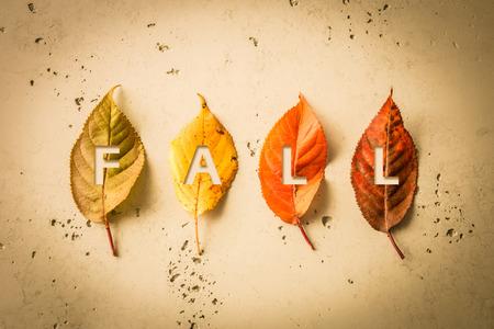 Themenplakatdesign des Falles (Herbst). Vier bunte Blätter nahmen von oben (Draufsicht, flache Lage) gefangen. Grauer Steinhintergrund. Layout mit Freitext (kopieren).
