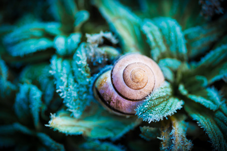 Macro - snail's shell in green frozen leaves. Nature - winter or autumn weather details. Dark moody light. Stok Fotoğraf - 92991190