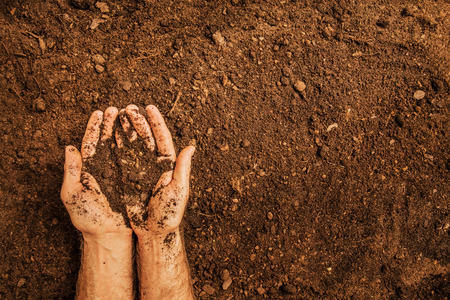 Soil in a strong farmers (mans) hands on field background captured from above (top view, flat lay). Agriculture, gardening or ecology concept layout with free text (copy) space.