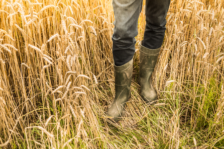 Farmers legs in rubber boots standing in front of a gold wheat field. Agriculture details - country outdoor scenery.