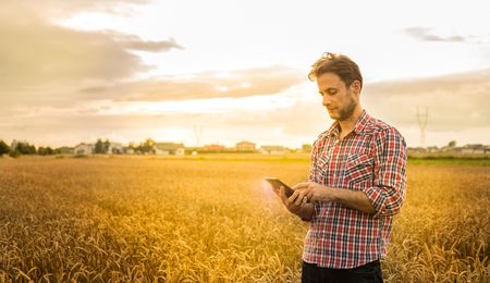 Forty years old caucasian farmer in plaid shirt working on (using) tablet in front of wheat field. Modern technology in agriculture - concept. Country outdoor scenery, sunset light. Stock Photo