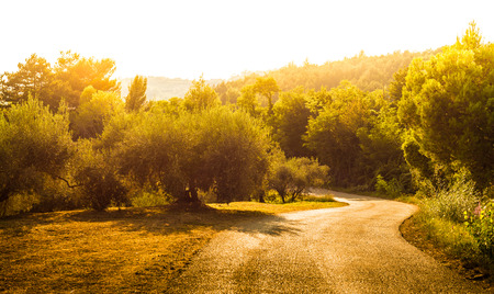 Peaceful countryside landscape with winding (curvy) road, hills, old olive trees and forest. Late summer - gold sunset light.
