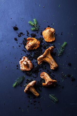 Raw chanterelle mushrooms, soil and pine branches on dark blue background. Moody composition captured from above (top view, flat lay). Free copy (text) space. 版權商用圖片