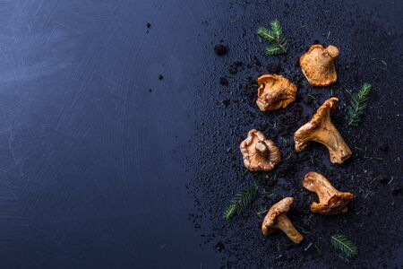 Raw chanterelle mushrooms, soil and pine branches on dark blue background. Moody composition captured from above (top view, flat lay). Background with free copy (text) space.