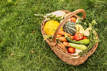 Colorful organic vegetables in a wicker basket outdoor. Captured from above (top view) on green grass background. Fresh harvest from the garden. Free copy (text) space.