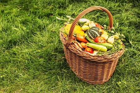 Colorful organic vegetables in a wicker basket outdoor. Green grass background. Fresh harvest from the garden. Free copy (text) space. 版權商用圖片