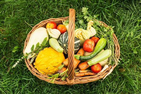 Colorful organic vegetables in wicker basket outdoor. Captured from above (top view) on green grass background. Fresh harvest from the garden.