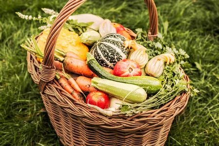 Colorful organic vegetables outdoor in a wicker basket. Green grass as background. Fresh harvest from the garden.
