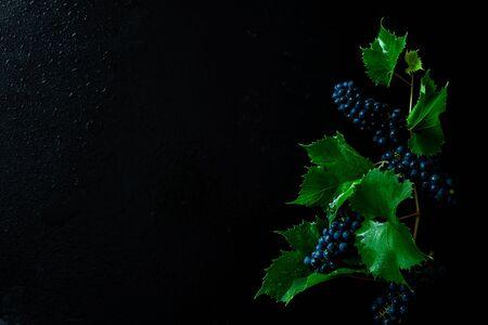 검은 배경에 포도 나무 식물입니다. 잎이 있는 포도 지점. 위에서 캡처했습니다(상단 보기, 평면도). 무료 사본(텍스트) 공간입니다. 어두운 변덕스러운 구성입니다.