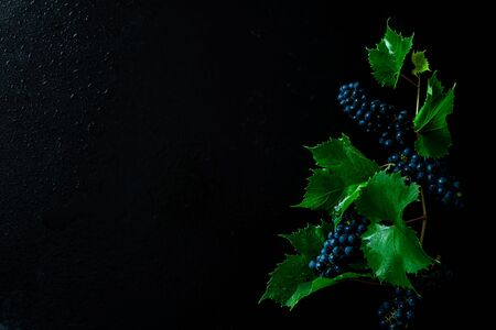 Grapevine plant on black background. Grapes branch with leaves. Captured from above (top view, flat lay). Free copy (text) space. Dark moody composition. 스톡 콘텐츠 - 132358495