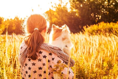 Young child girl (back turned) holding a pomeranian (spitz) dog outdoor on the meadow - happy childhood concept. Gold sunset light.