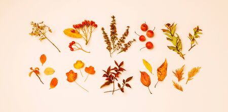 Collection of orange and red autumn leaves on cream background. Nature details - seasonal horizontal banner. Captured from above (top view, flat lay). 版權商用圖片