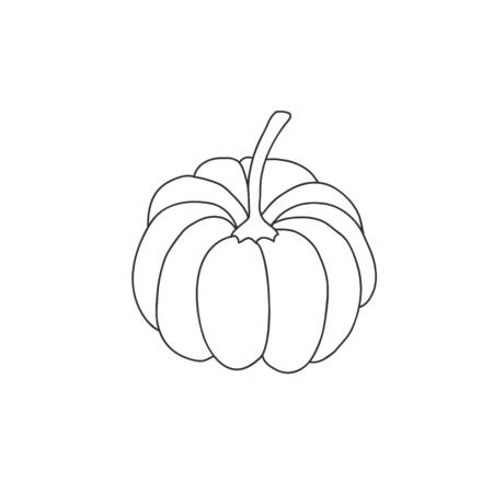 Pumpkin linear drawing. Vector freehand illustration in doodle style.