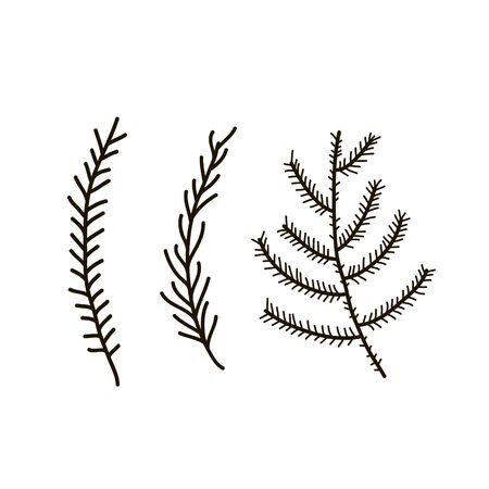 Vector pine tree branches set black silhouettes isolated on white background