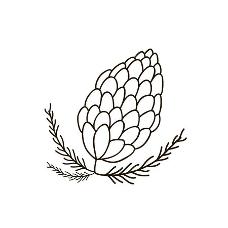Illustration of a fir cone. Vector linear drawing by hand.