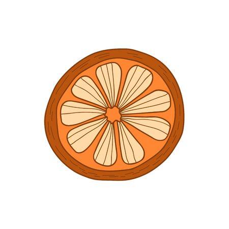 Orange fruit. Vector illustration of an orange. Mandarin drawing