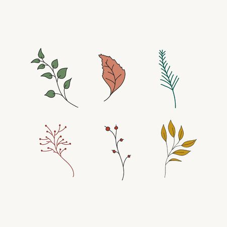 Collection of color vector plants. Freehand doodle botanical illustration.
