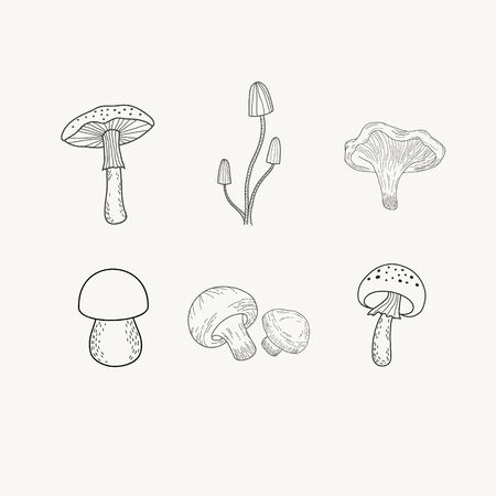 Set of mushrooms. Vector illustration of mushrooms in doodle style. Black and white engraving. Amanita, champignons.