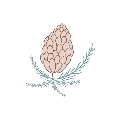 Illustration of a fir cone. Vector color hand drawn illustration