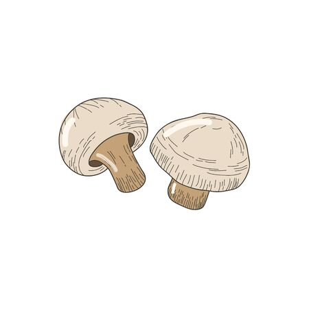 Champignon mushrooms freehand drawing in doodle style. Color illustration.