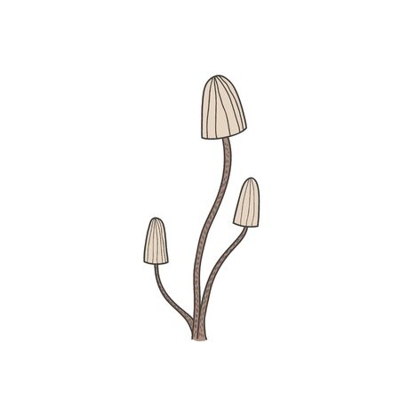 Drawing of mushrooms. Linear color freehand illustration in doodle style. 版權商用圖片 - 137767061