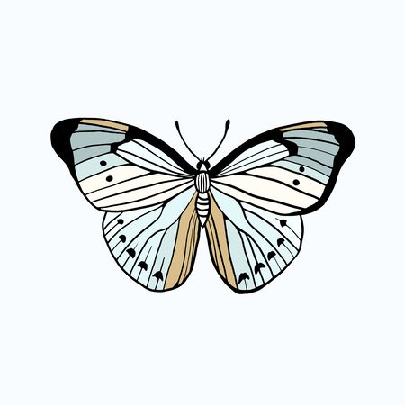 Butterfly. Vector color freehand drawing. Doodle style illustration Ilustracja