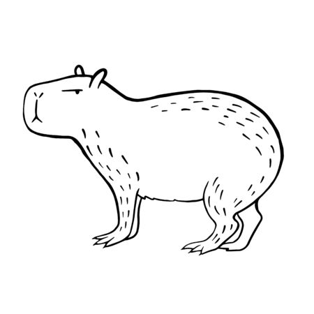 Capybara. Vector linear illustration of a capybara. Doodle style animal drawing