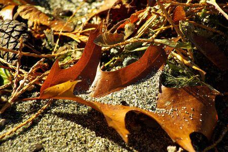 Isolated leaf on the beach
