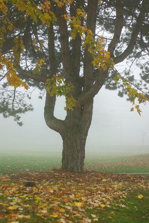 Misty morning fog in Seattle