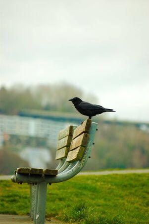 bird alone in city park Stok Fotoğraf