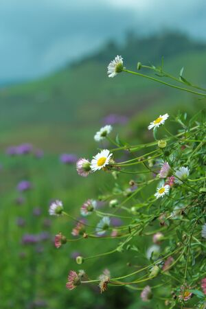 Flowers on the hill Stock Photo - 15854090