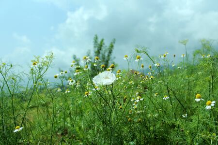 Flowers on the hill Stock Photo - 16139916