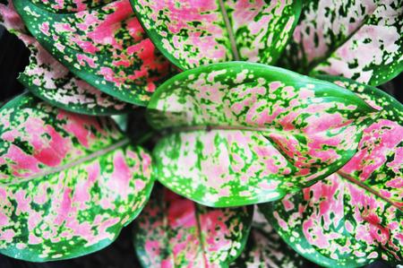 breezy: the beauty flower Stock Photo