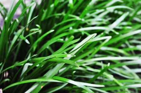 breezy: green nature