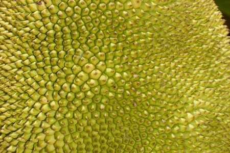 Close up of a jackfruit photo