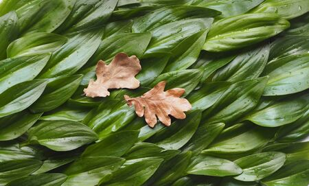 Two dried autumn leaves against a background of succulent green leaves. The idea of a green sea and sea waves. Zdjęcie Seryjne
