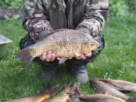 Close up. Russian rivers.River fish carp in the hands of a fisherman.